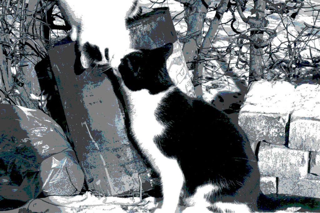 Cat Stevens Grundschule